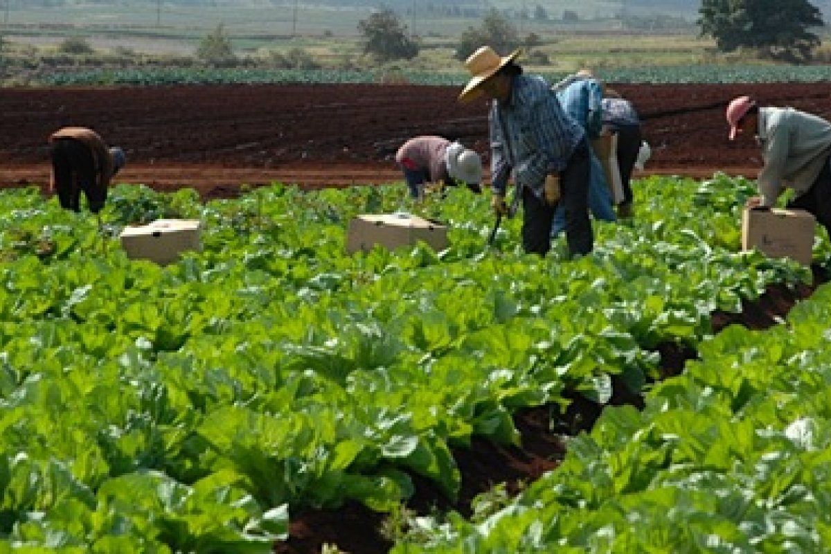 """Las actividades agrícolas """"igual puede subir muchísimo en un mes que bajar"""" ya que su carácter obedece al clima y temporalidad, advirtió el economista Jonathan Heath."""