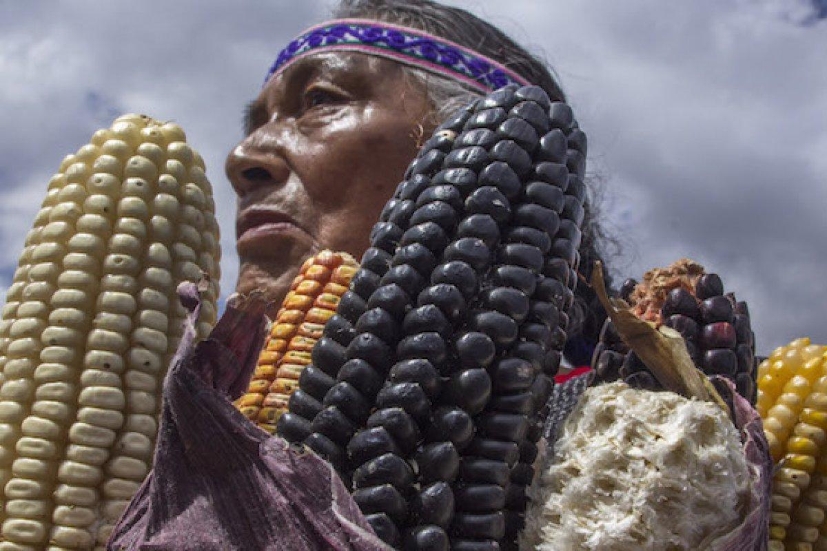 En México la importación de maíz amarillo crece más rápido que su producción.